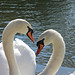 "Heart of Swans • <a style=""font-size:0.8em;"" href=""http://www.flickr.com/photos/124925518@N04/20067908391/"" target=""_blank"">View on Flickr</a>"