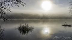 (reko22) Tags: brume lac reflet roseaux