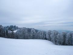 Uto Staffel [Winter Edition] / Uetliberg ZH (andwest) Tags: utostaffel uetliberg winter zurich zürich fujixpro1 fujinonxf18mmf2r schweiz switzerland snow wandern hiking myswitzerland