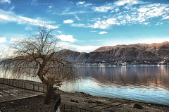 rimessa di sponda (pamo67) Tags: pamo67 remittanceofshore lago lake riva albero tree pasqualemozzillo