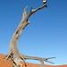 DSC02826 - Namibia 2010 Sossusvlei