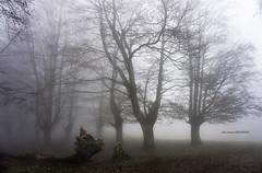 Egiriñao (Jabi Artaraz) Tags: jabiartaraz jartaraz zb euskoflickr egiriñao gorbeia hayedo pagadia niebla
