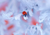 Ladybug in a Winter Wonderland (ElenAndreeva) Tags: flowers red color blue sun light summer bokeh beautiful closeup cute colors insect canon top insects soft composition sweet focus bug filter amazing nature winter macro flower christmas creative ledybug tones best