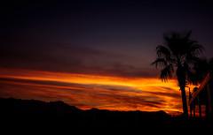 Palm Solo Sunrise.jpg (melissaenderle) Tags: mountain desert sky arizona