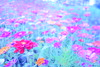 DSC03121 (Nai.) Tags: flowers plant dreamy 日系 空氣感 atmospheric sonyrx100 colors colorful