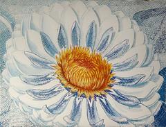 DSC0966914 (scott_waterman) Tags: scottwaterman painting paper ink watercolor gouache lotus lotusflower blue bluehue
