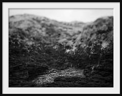 behind echo beach (Andrew C Wallace) Tags: echobeach ir infrared olympusomdem5 microfourthirds m43 blowhole flinders morningtonpeninsula victoria australia blackandwhite bw blur dof bokeh tiltshift