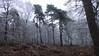 Les arbres couvert de givre - Forêt Domaniale de Rambouillet - Saint-Léger-en-Yvelines - Yvelines - Île-de-France - France (vanaspati1) Tags: les arbres couvert de givre forêt domaniale rambouillet saintlégerenyvelines yvelines îledefrance france vanaspati1 arbre nature hiver froid conifères fougères