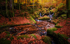 Beautifull Fall Colors (kevingomes1) Tags: autumn yellow trees leaves landscape red forest nature stones outdoor rocks fall leaf orange colors green wood black germany falls stream moss waterfalls exploring gertelbachfälle outside blackforest