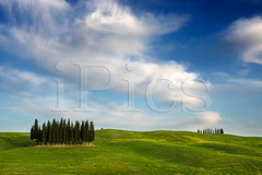 Cypress trees in a Tuscany landscape (iPics Photography) Tags: cypress tuscany trees cypresses group landscape valdorcia orcia nature torrenieri flowers yellowflowers italy italian hills grove forest clouds sanquirico valdâorcia