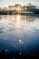 Winter (mnicol13) Tags: winter hiver chatelaudren glace ice gelé water froid janvier 2017 nikon d3200 1855mm sunrise tree sun soleil lever cotes armor bzh bretagne breizh frozen
