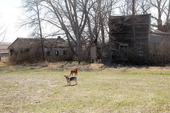 FAR From Over* (Ackermans Finest Photography~ ( see the Sets+) Tags: house abandoned dead store north away far dakota