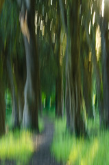 abstracttrees (markstewart40) Tags: trees abstract motion blur green art nature movement artistic