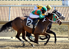 2015-02-13 (29) r2 Victor Carasco on #2 Complimenting for 3rd (show) (JLeeFleenor) Tags: photos photography md marylandracing marylandhorseracing laurelpark jockey   jinete  dokej jocheu  jquei okej kilparatsastaja rennreiter fantino    jokey ngi horses thoroughbreds equine equestrian cheval cavalo cavallo cavall caballo pferd paard perd hevonen hest hestur cal kon konj beygir capall ceffyl cuddy yarraman faras alogo soos kuda uma pfeerd koin    hst     ko  sheldon sheldonrussell maryland