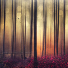 immersion (Dyrk.Wyst) Tags: morning autumn trees light people blur male fall nature leaves silhouette fog forest photomanipulation germany square landscape deutschland licht haze solitude mood nebel branches laub natur silhouettes atmosphere manipulation foliage motionblur dreamy abstraction colourful minimalism conceptual wuppertal ste landschaft wald bume bergischesland atmosphre wanderer stimmung dunst quadratisch beechtrees bewegungsunschrfe creativephotography photoshelter konzeptionell modernromantic