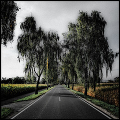 Alley II (wide-angle.de) Tags: digital germany de places top500 treesi y201212 y201212placestreestop500
