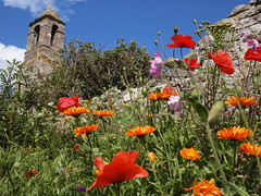Flowers by Holy island Church (cycle.nut66) Tags: flowers blue red sky orange green tower church parish stone wall island four bell olympus holy micro poppies mauve thirds evolt epl1 mzuiko