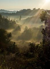 paysages de Mirabel (Henri Aubron) Tags: paysage landscape brouillard mint mind brumes colines montagne sun soleil levant henri aubron mirabel quercy coteaux occitanie sudouest midi sunrise