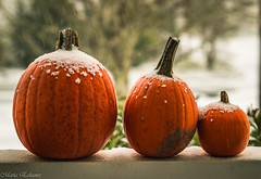 I think Fall is over (Maria Echaniz) Tags: ithinkfallisover snow pumpkins winter cold vegetable coldweather portland pdx oregon