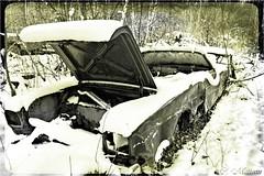 161123-05 Ford Galaxie (clamato39) Tags: carwreck carcemetery cargraveyard cimetièredautos old oldcars stamable provincedequébec québec canada blackandwhite noiretblanc bw monochrome vieux ancient