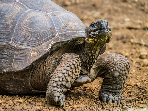 """Galapagos-15.jpg • <a style=""""font-size:0.8em;"""" href=""""http://www.flickr.com/photos/91306238@N04/31629216844/"""" target=""""_blank"""">View on Flickr</a>"""