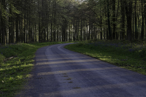 Road to the Bluebells