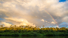 light in the canopy (Thiago Orsi) Tags: virua anaua river rio parque park national nacional luz light canopy dossel pordosol sunset copa amazonia amazon flooded forest floresta alagada nuvem cloud sky chuva rain rainbow arcoiris ceu storm tempestade tarde evening