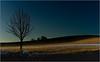 Henry Tree (piontrhouseselski) Tags: cz moravia winter tree highlands