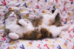 Pallina 1397 (Federico Basile FB Photo Images) Tags: gatto gatta gattina gattino gattini animale felino pallina cucciolo cucciola azione verde neve salto coccole fusa giochi cat smallcat cats cute sweet sweetcat