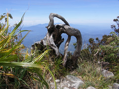 20060802_62 (Badly Drawn Dad) Tags: gunungkinabalu malaysia mys sabah beautifulmorning labanrata geo:lat=605821572 geo:lon=11656606257 geotagged descent downmtkinabalu