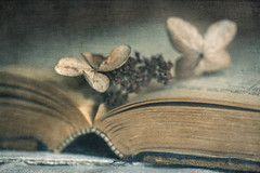 (Elizabeth_211) Tags: hydrangea book antique texture 2lilowls stilllife macro closeup aged weathered