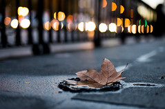 The city of falling leaves (hector_cbs) Tags: leaf lights bokeh light night citylights street streetphotography city hoja luz luces rain rainy d610 nikon