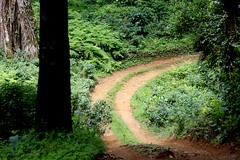 road through the woods at Dare Nature Wayanad