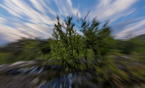 Speed Bush