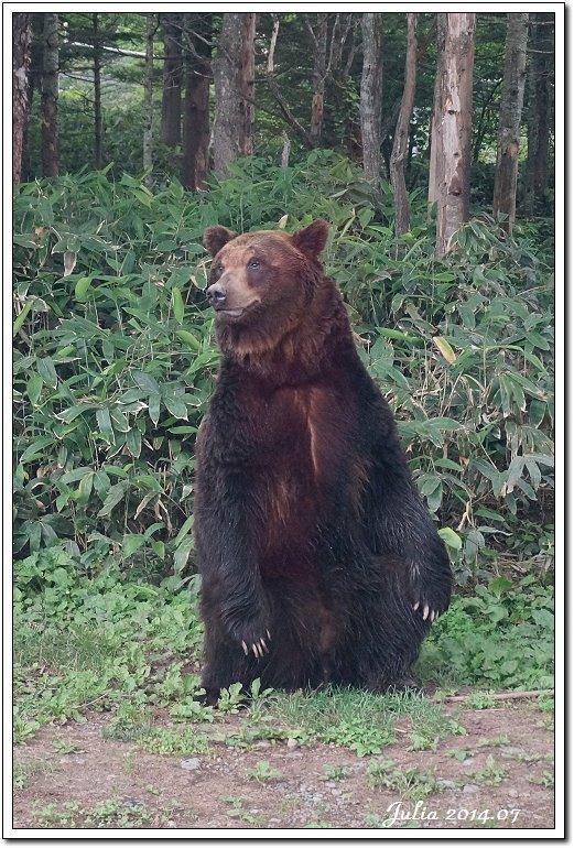 熊牧場 (9)