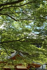 (aozora.umikaze) Tags: japan nara saki kisetsu sore aozora toki matahitotsu kagayaka