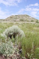 (Coastlander) Tags: summer nature outdoors sage prairie westernkansas scottcounty shortgrassprairie scottlakestatepark