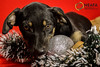 IMG_0527 (Owmeex) Tags: natal neafa christmas ong cães gatos dogs cats