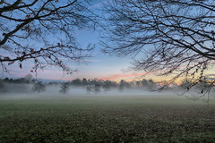 20170108_Mist in the Park (Damien Walmsley) Tags: mist park walk branches dawn morning sky grass trees knowlepark knowle solihull