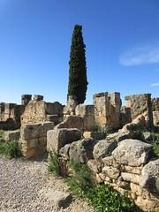 Ruins and tree with blue sky, Volubilis, Morocco (Paul McClure DC) Tags: morocco almaghrib fèsmeknèsregion volubilis jan2017 roman architecture historic