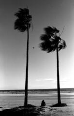 Venice Beach (H_H_Photography) Tags: street analog fe2 nikon nikonfe2 kodak blackandwhite bw streetphotography analogstreet analogtravel los angeles la california beach palm streetphoto streetshot streetphotgraphy