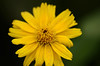 Yellow (tiago_provenzano) Tags: flower ye yellow