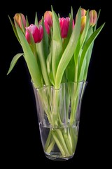 Tulips in a vase...