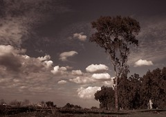 That bizarre eucalyptus tree dream (Ivona & Eli) Tags: fence monochrome outdoors clouds sky tree eucalyptus middleeast israel telafeka antipatris