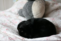 (nualasee) Tags: cat sleep snooze home pet nap bed tired calm peaceful winter