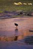 IMG_3651 (FelipeDiazCelery) Tags: sanpedro sanpedroatacama sanpedrodeatacama desierto altiplano atacama andes chile fauna aves valledelaluna