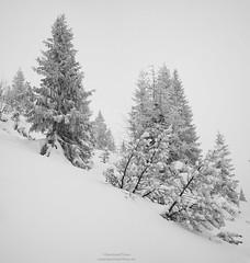 Trees in winter at Scharfreiter N°1 (Bernhard_Thum) Tags: bernhardthum thum distagon3514zm leicam karwendel alps blackandwhite distagont1435 zm nature tistheseason rockpaper