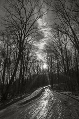 Icy Road (frntprchprss) Tags: icy ice road slippery forest winter snow sun light sunset trees scurve jamesgehrt blackandwhite