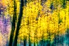 Zion National Park Fall Foliage Wallpaper (The Shared Experience) Tags: zion zionnationalpark nps100 2014 fall foliage wallpaper