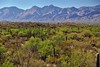 Saguaro Cactus with a Mountain Backdrop (Saguaro National Park) (thor_mark ) Tags: nikond800e saguaronationalpark saguaronationalparkrinconmountaindistricteast lookingnorth day1 capturenx2edited colorefexpro desert desertlandscape sonorandesert saguaro cactus carnegieagigantea saguarocactus outside landscape nature sunny blueskies cactusacrossdesertlandscape mountains mountainsindistance mountainsoffindistance desertplantlife intermountainwest southwestbasinsandranges southeastarizonaranges huachucaarea santacatalinamountains blackettsridge rattlesnakepeak cactusforestscenicloopdrive cactusforestdrive roadsidestop arborescenttreelikecactus project365 portfolio arizona unitedstates